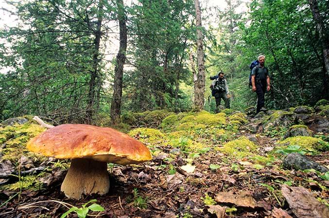 Testez vos connaissances sur les champignons !