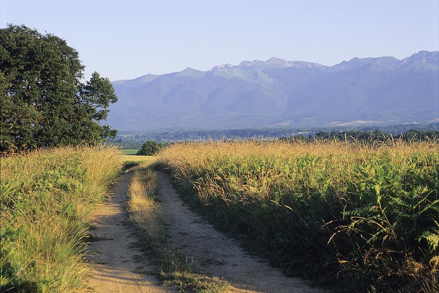 Le sentier GR 653, Sentier vers Saint-Jacques-de-Compostelle via Arles