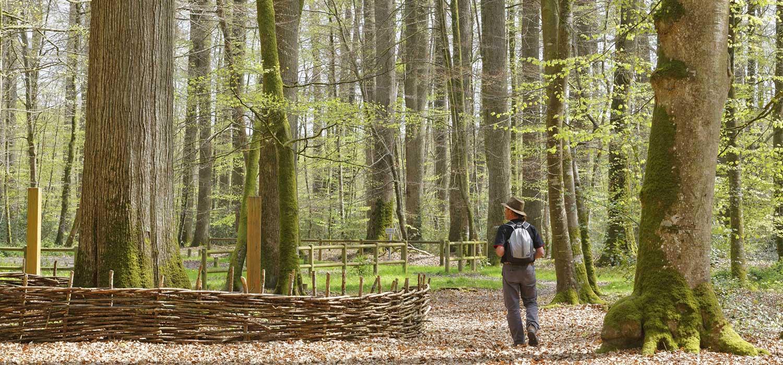 GR de Pays Vallée du Loir - Boucle au départ de Mayet