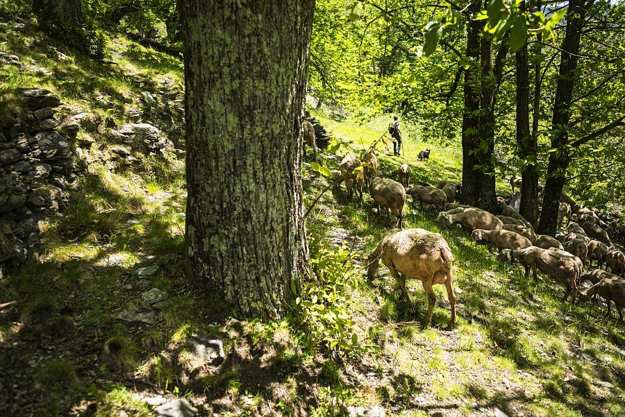 GR de Pays Tour de la Montagne ardéchoise - Boucle sud