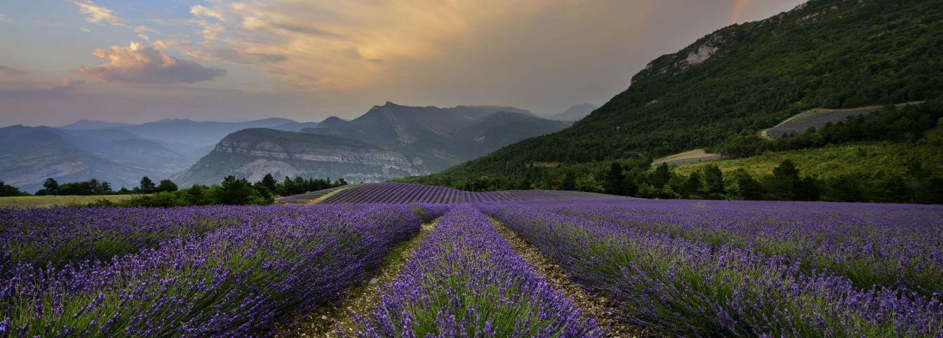 GR® de Pays : Tour des Baronnies provençales